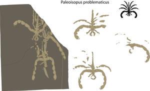Sea Spider Fossil