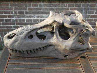 Gorgosaurus libratus Skull Sculpture 1 by olofmoleman