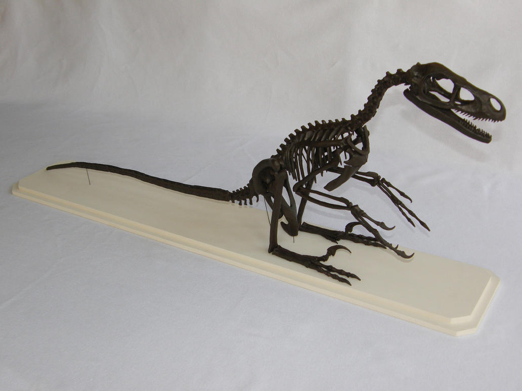 Bambiraptor Skeleton Sculpture by olofmoleman