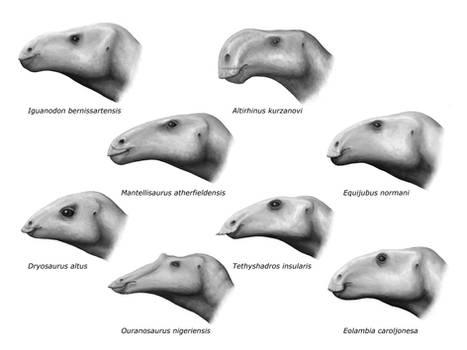 Iguanodontids and Hadrosauroids