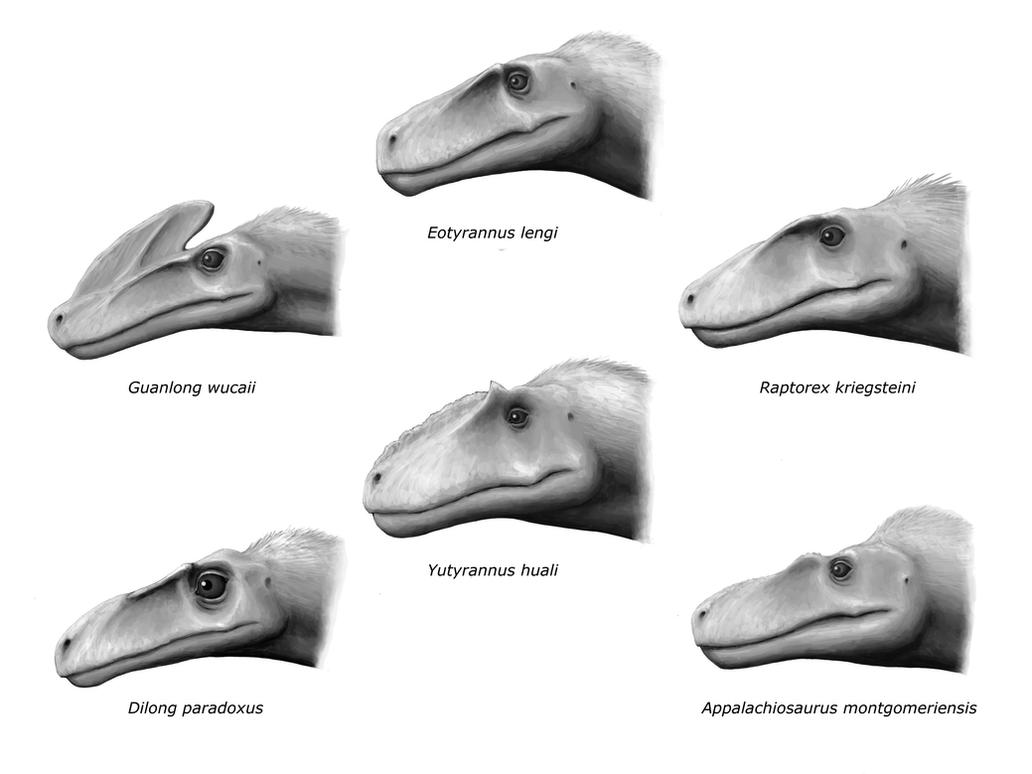 Basal Tyrannosauroids by olofmoleman