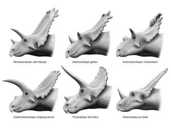 Chasmosaurinae by olofmoleman
