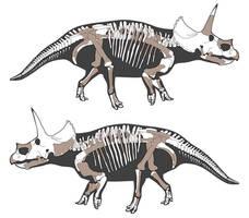 Dirk the Triceratops horridus