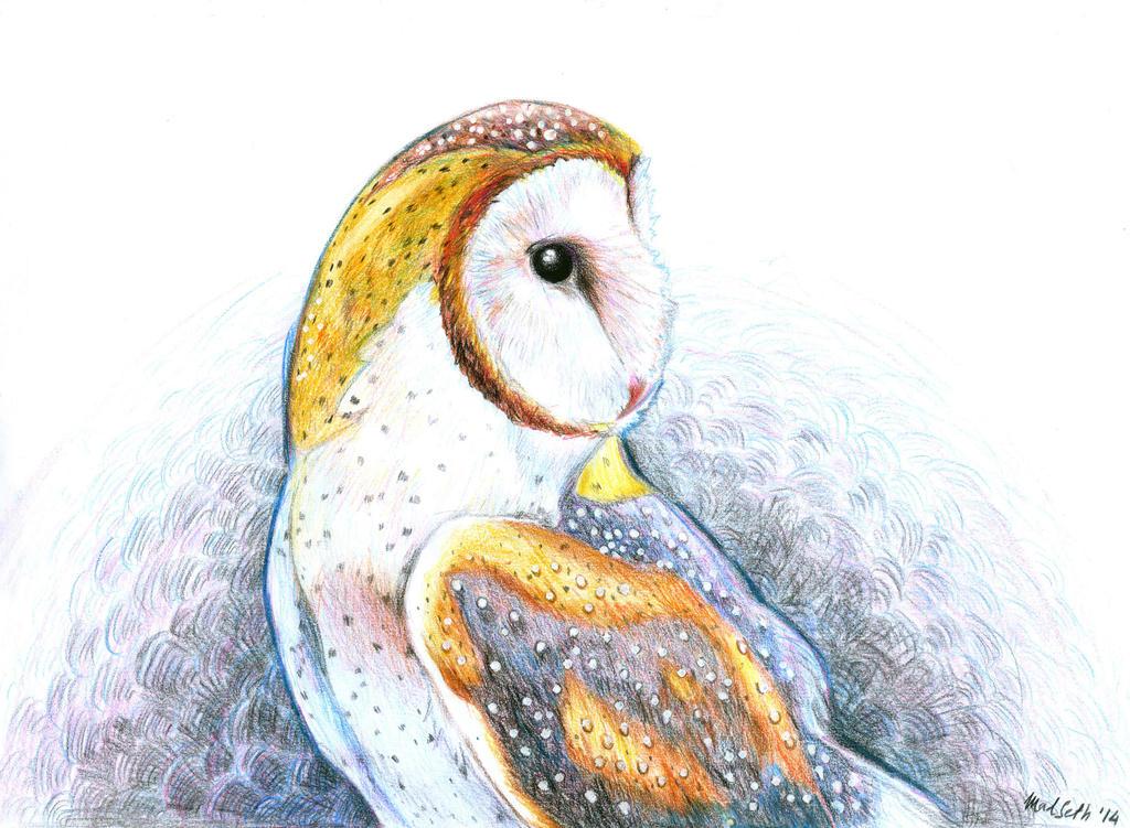 Barn Owl by Hoshiko91
