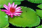 Vibrant Blossom