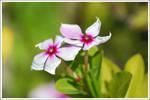 Spring Time Butterflies