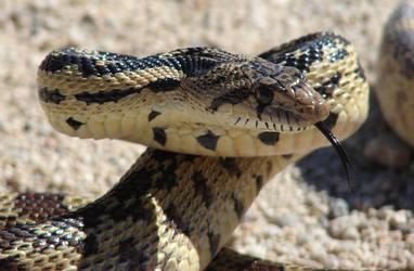Snake Eyes 3