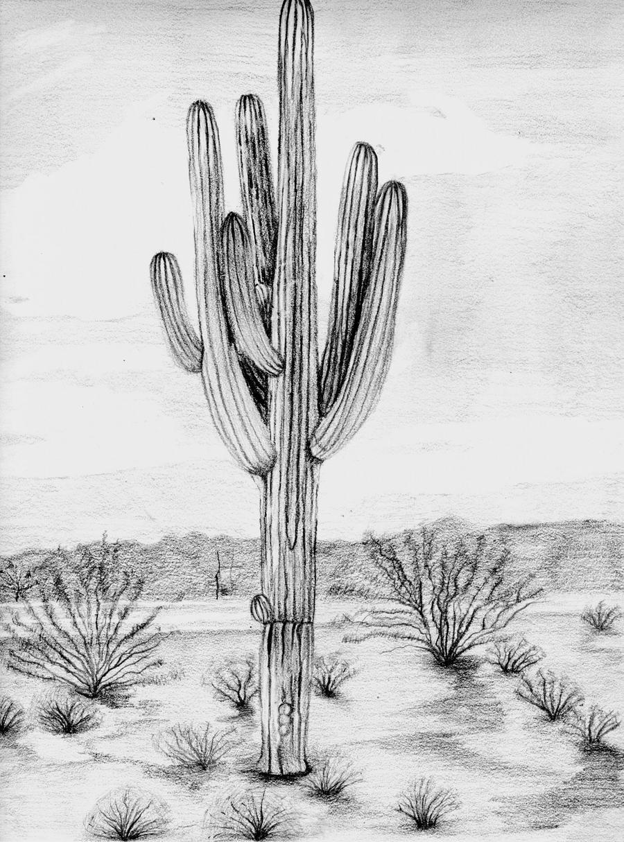 Saguaro Cactus By Starburry On DeviantArt