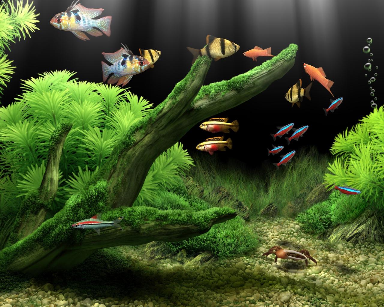 Dream Aquarium By Maskedjudas On Deviantart