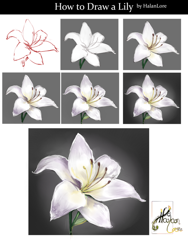 How to draw a lily by halanlore on deviantart izmirmasajfo