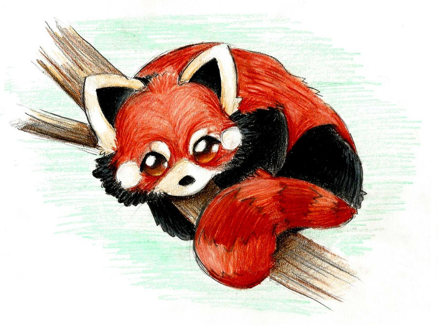 Chibi red panda - photo#21