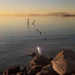 bird on the rocks... by VaggelisFragiadakis