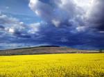 yellow fields by VaggelisFragiadakis