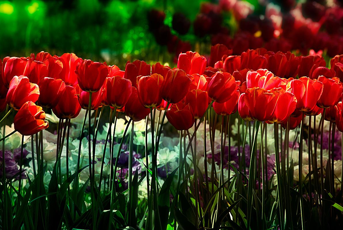 Beautiful Spring Garden Flowers Beautiful Peaceful