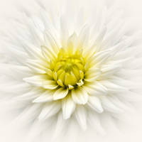 white  with a touch of yellow by VaggelisFragiadakis