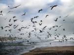 fleeing.....