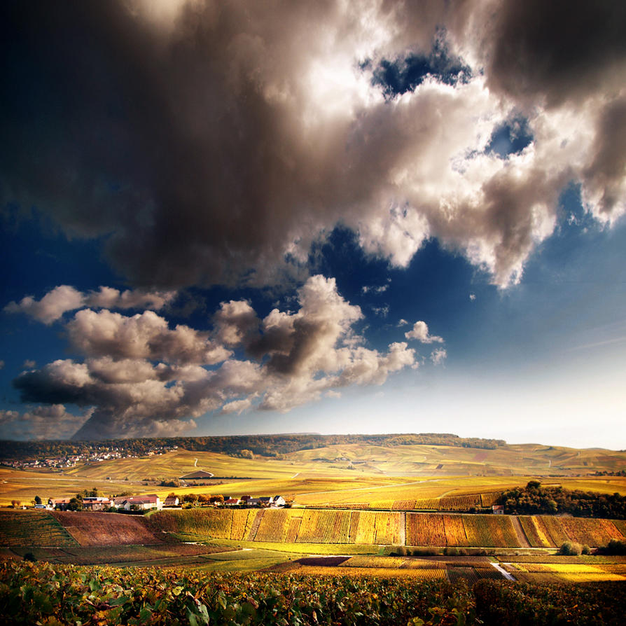 clouds on vines.... by VaggelisFragiadakis