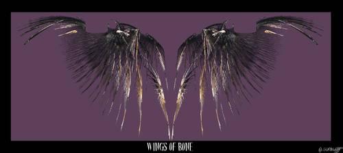 Wing of Bones by kitwickliff