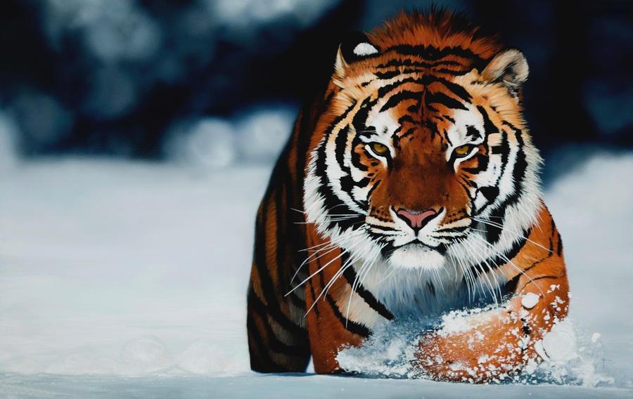 TigerCat by TigerCat-hu