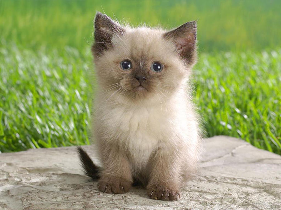 Cute Cat by TigerCat-hu
