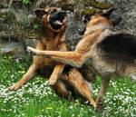 Dog Stock 7