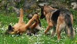 Dog Stock 8