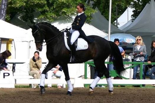 Dressage Competition Stock 1