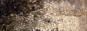 Fish scales 04