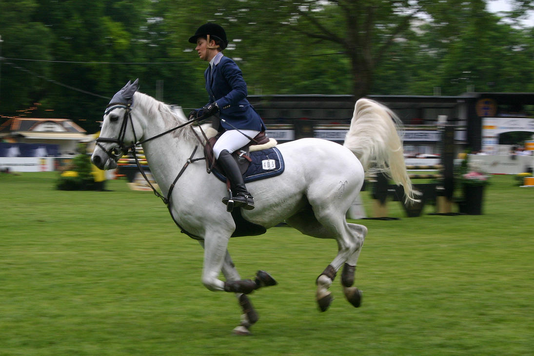 Show Jumping Stock 014 by LuDa-Stock