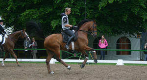Dressage Flying Change Stock 01 by LuDa-Stock