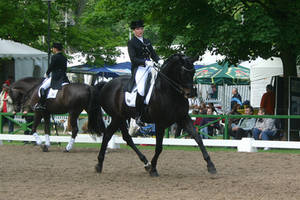 Dressage Trot Stock 06 by LuDa-Stock