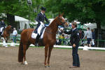 Dressage Halt  Stock 01