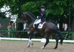 Dressage Canter Stock 02