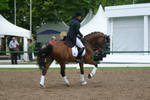 Dressage Canter Stock 03