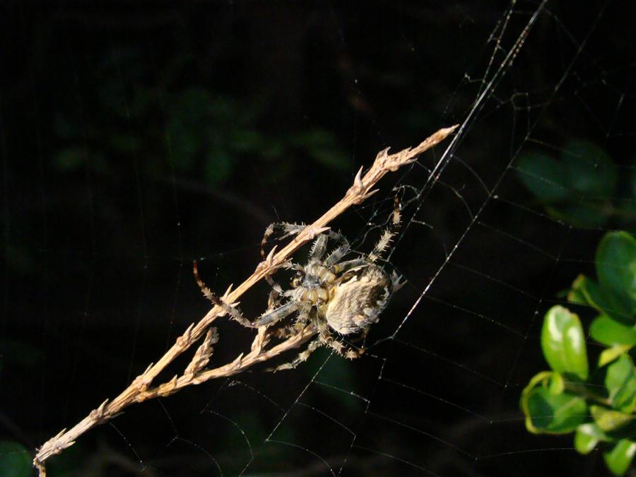 play spider bugs da