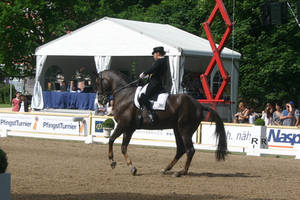 Dressage Canter Pirouette Stock by LuDa-Stock