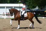 Dressage Riding Trot Stock