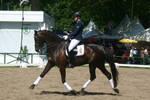 Dressage Riding Trot Stock