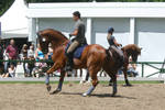 Dressage Riding Canter Stock