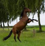 Bay Horse Rearing Stock