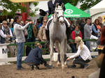 Dressage Riding Competition Stock