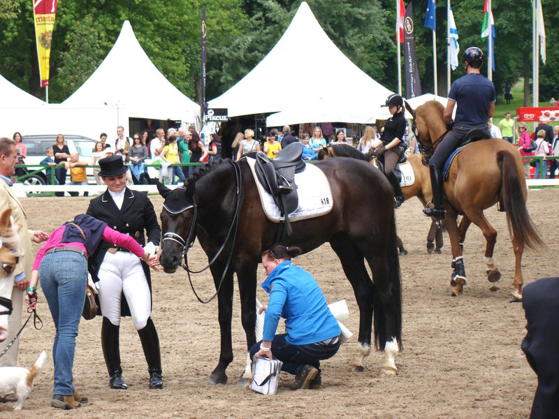 Dressage Riding Competition Stock Preparations