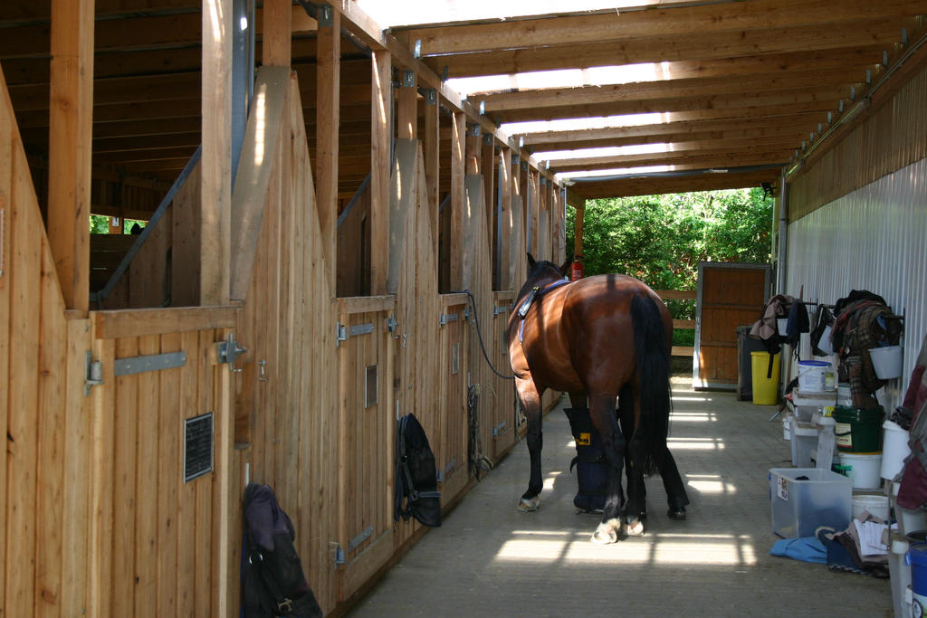The Stables Equestrian_facility_stock___stable_aisle_by_luda_stock-d744o13