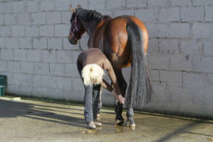 Grooming Stock Hoof Care by LuDa-Stock