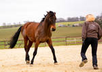 Free Dressage- Let's play