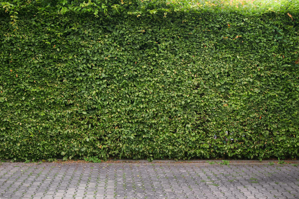 Green Hedge Background By LuDa Stock On DeviantArt