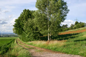 Path Along a Meadow Stock 8 by LuDa-Stock