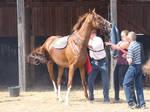 Saddle up a race horse