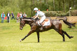 Eventing Stock - Full Speed Gallop 02