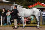 Conformation - Irish Sport Horse Eventer by LuDa-Stock